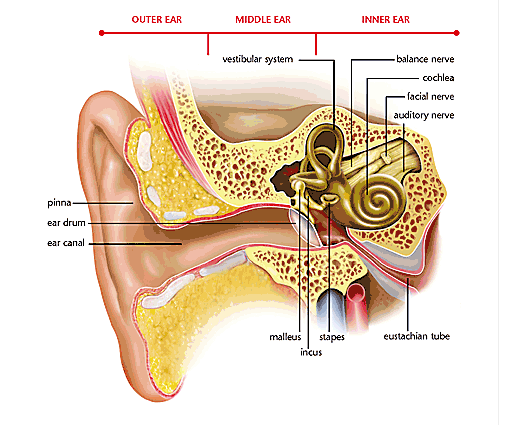 how to tell if you have impacted ear wax