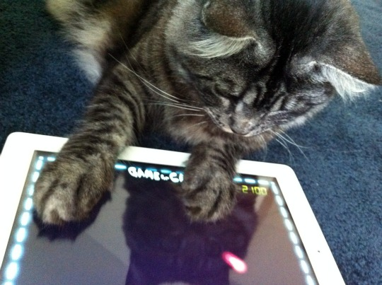 Kitten Using App
