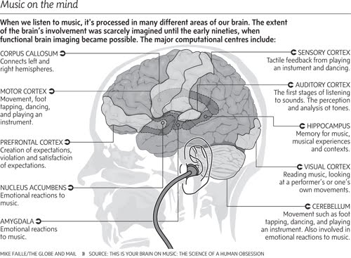 Music being processed in the brain