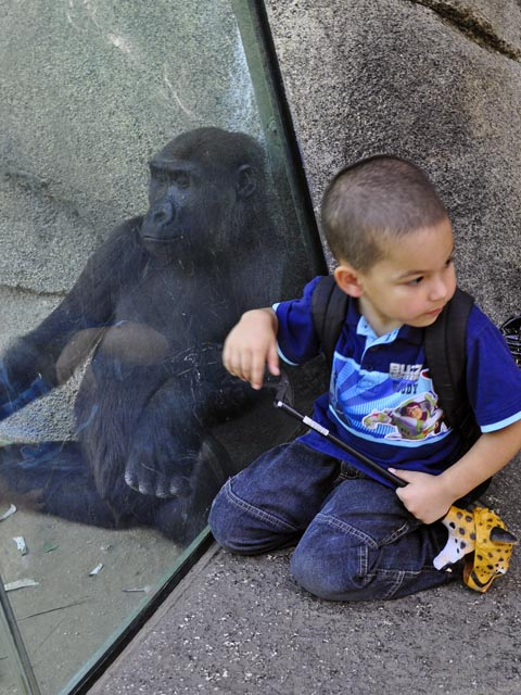 boy and chimp