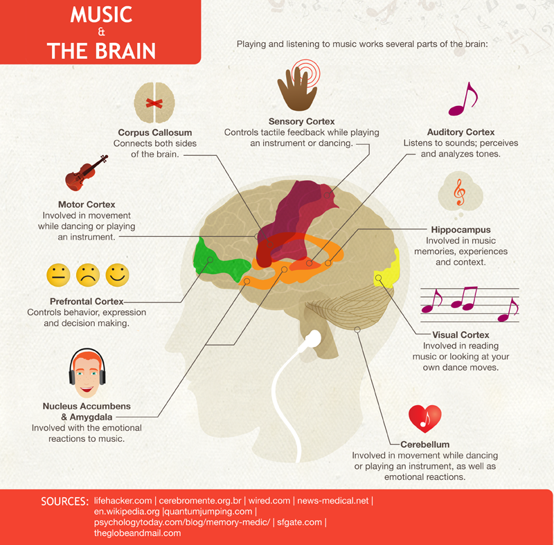 The brain reacts to music